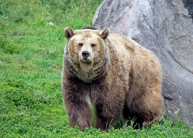 Los Grizzlies del mañana